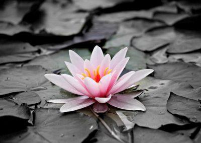 Yoga Nidra General – Introduction and Meditation